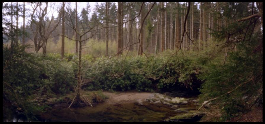 ForestIreland_01
